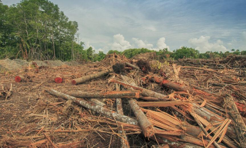 borneo-deforestation-1