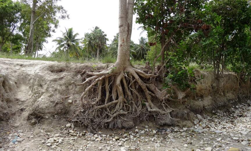 soil erosion on a riverbank
